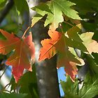 Maple leaf by bannercgtl10
