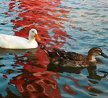 Ducks by Gema Zavala