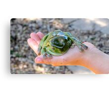 Restful Frog Canvas Print