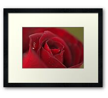 Raindrops on Roses #3 Framed Print