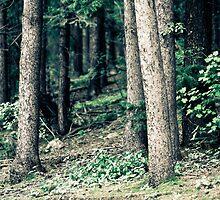 lost in the woods by Jen Wahl
