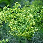 Yellow flowers at Melbourne Zoo by JudeStarr