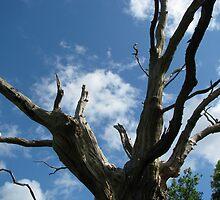 Gog - Bones of An Ancient Oak by AppleAndThorn