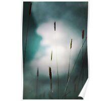Grass 'gainst sky Poster