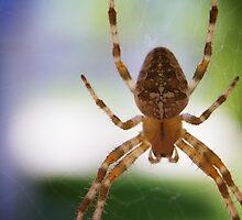 Divine Arachnid by Jigsawman