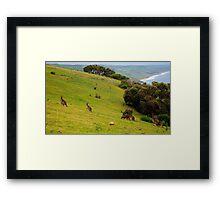 Kangaroos with Joeys grazing Framed Print