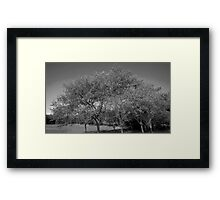 Black and White Nature  Framed Print
