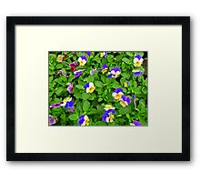 Burst of colours Framed Print
