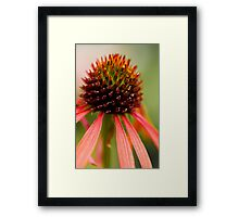 Orange Cone Framed Print