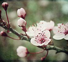 A little Spring in my step! by Lynda Heins