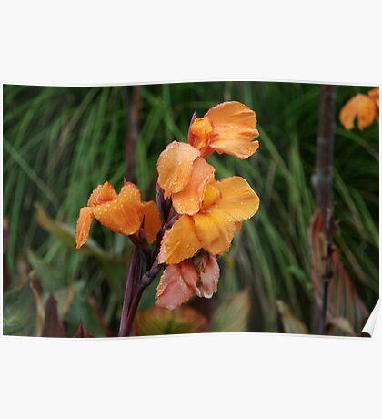 Orange flowers in the rain Poster