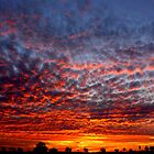 The sky is on fire by Tamara Travers