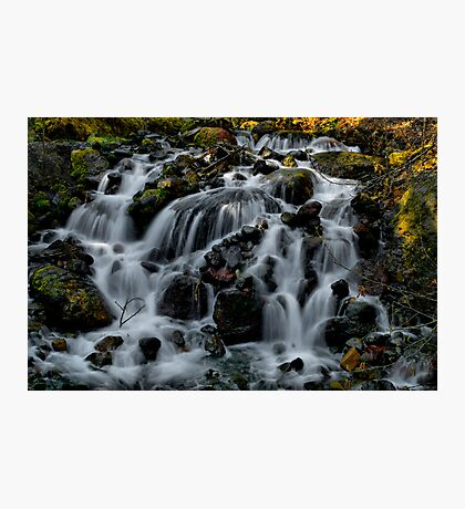 The Gathering ~ Oregon Cascades ~ Photographic Print
