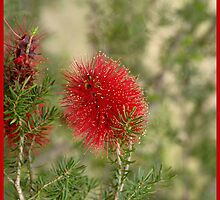 Melaleuca by georgieboy98