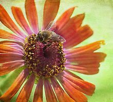 bee at work by Teresa Pople