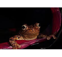 the frogster Photographic Print
