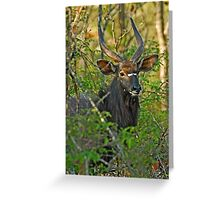 Handsome dude! Greeting Card