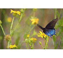 Contrasting beauty Photographic Print