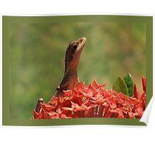 Gilbert the Lizard Poster