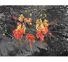 True Colours - Flowers of Malaysia Photographic Print