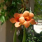 Flowers by madamealyssa