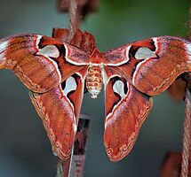 Featured in 'Insects, Bugs and Creepy Crawlies' – 18 January 2014