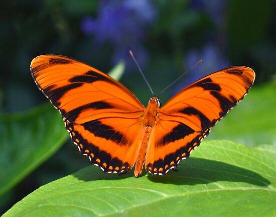 Orange Tiger by Rodney Campbell