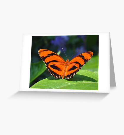 Orange Tiger Greeting Card