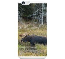 Bull Moose, Algonquin Park iPhone Case/Skin