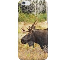 Big Bull Moose, Algonquin Park iPhone Case/Skin