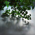 Green corridor by Bluesrose
