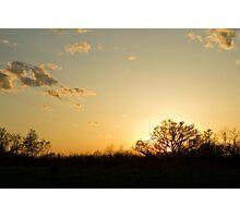 Tree of Light Photographic Print