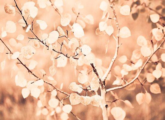 autumn bokeh by Jen Wahl