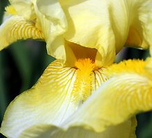 Iris by sstarlightss