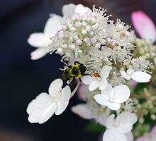 Bumble Bee... by royxnavy