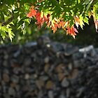 Maple Leaves agains the Woodpile by bannercgtl10