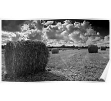 Last Harvest Poster