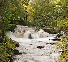Autumn in Talybont by Steve  Liptrot