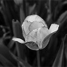 Reminder of Spring by shadyuk