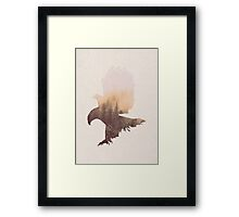 Eagle - Bird of Prey Framed Print