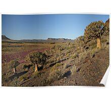 Aloe landscape Poster