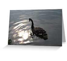 Black Swan 1 Greeting Card
