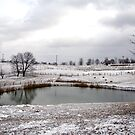 Winter on a Winery by Kendra Kantor