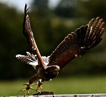 flight- goose by hellibelli5000