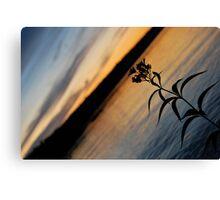Lonesome Flower - Lunenburg, Nova Scotia Canvas Print
