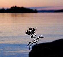 Lonesome Flower 2 - Lunenburg, Nova Scotia by Caites