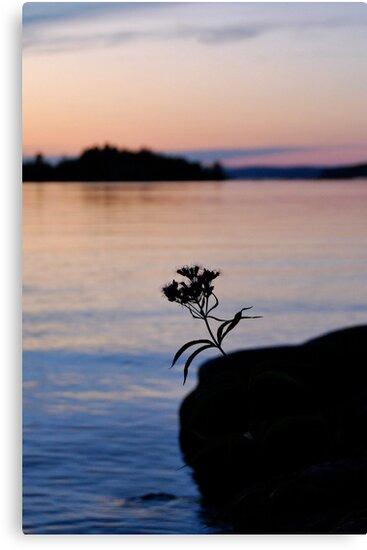 Lonesome Flower 2 - Lunenburg, Nova Scotia by Caites