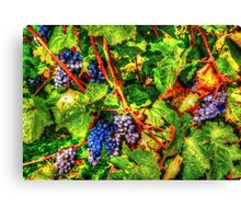 wine vintage vineyard Canvas Print