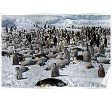 Snow Hill Island Emperor Penguin Rookery Poster