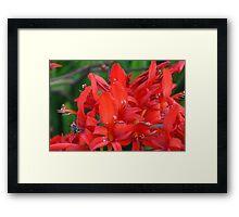 Scarlet Sting Framed Print